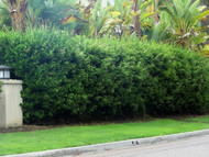 ​Beautify Your Landscape With a Privacy Hedge