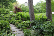 ​Native ferns can make easy borders