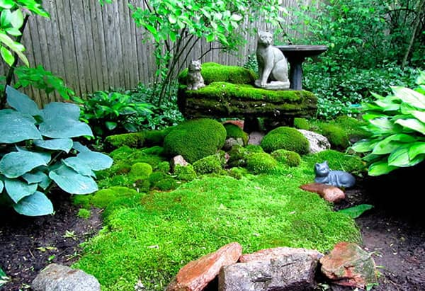 beautiful moss landscaping