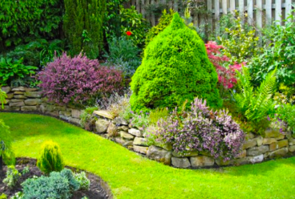 Image result for shrubs in landscaping