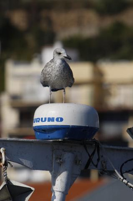 Seagull perched on antenna (avoid this with the StopGull Keeper)