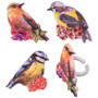 Spring Time Birds Cupcake Toppers (6 pc)