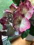 Hydrangea Petal Veiner Set