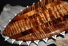 "AAA Grade Koa Lei O Mano War Club 19"" - Shark Teeth 