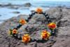 Large Kukui Nut with Lantern Ilima Black/Orange - Silk Hawaiian Leis