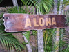 "Aloha Sign Driftwood w/ Rope 40"" - Tropical Decor 