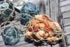 Seashell In Coastal Net Bag - Coastal Living