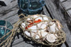 Off White Seashell w/ Netting Bag - Coastal Living