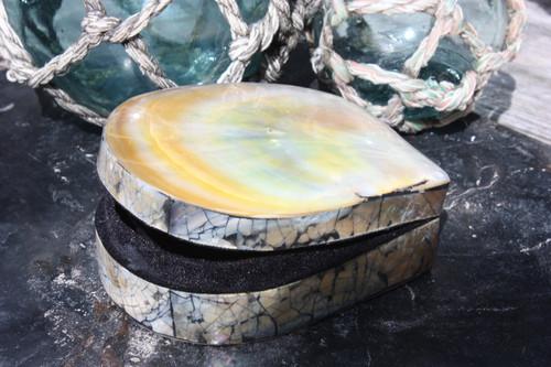 Seashell Keepsake Box Large - Gold - Coastal Decor   #sur28007