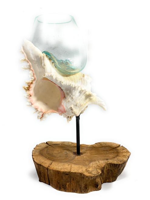 "Beautiful Hand Blown Glass on Seashell w/ Teak Root Base 12"" X 9"" X 5"" - Centerpiece | #ren01"