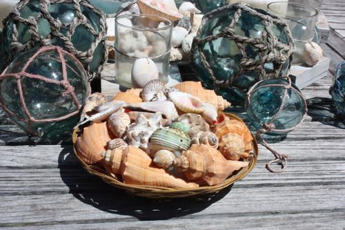 Seashell Baskets Assortment - Medium - Seashell Decor