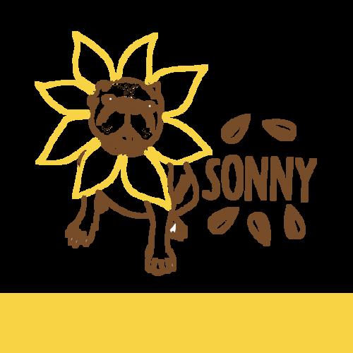 Bold Dog Sonny, 4 pack 16oz cans