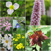 Great British Native Marginal Plant Collection