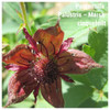 Pontentilla Palustris – Marsh cinquefoil