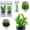 aquarium plant collection
