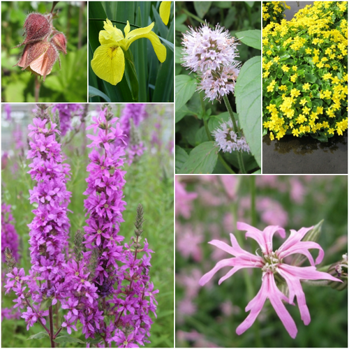 Marginal Plant Collection for Wildlife