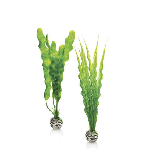 biOrb Easy Plant Set Green - Medium