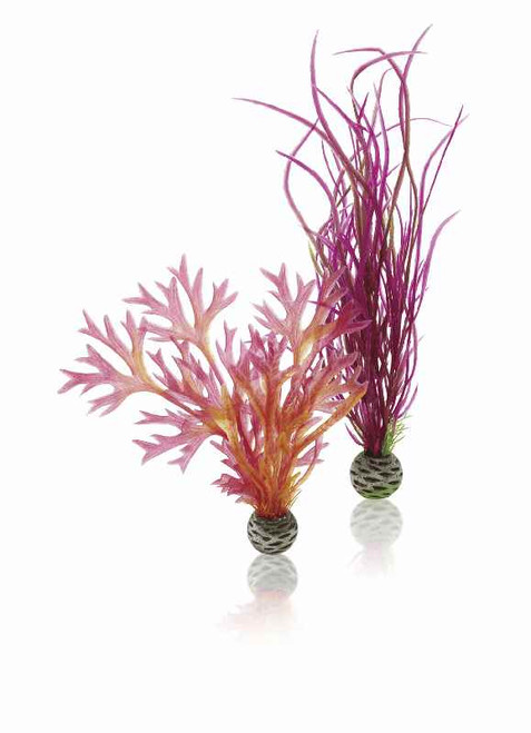 biOrb Plant Set M Red & Pink