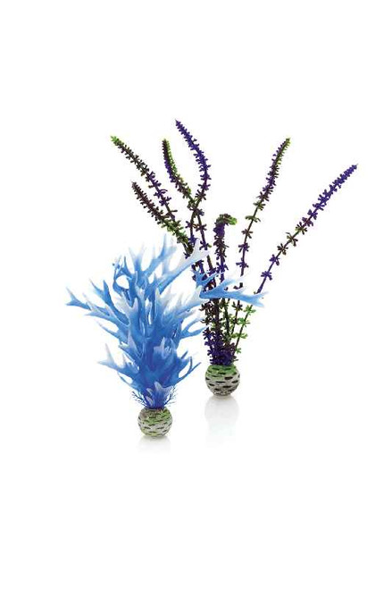 biOrb Plant Set M Blue & Purple