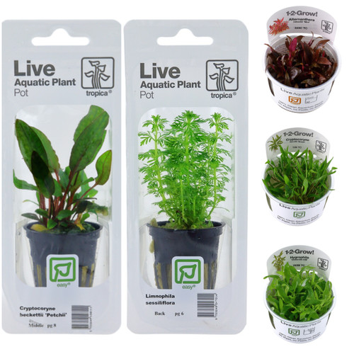 aquarium plant collection