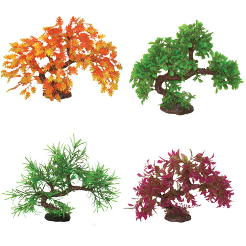hugo kamishi bonsai trees