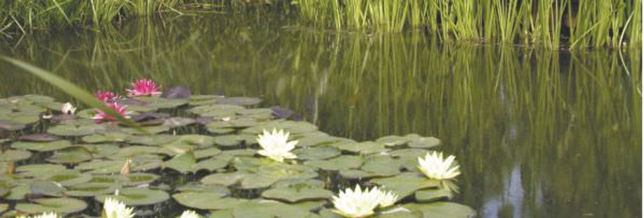 How to prepare your pond for winter...