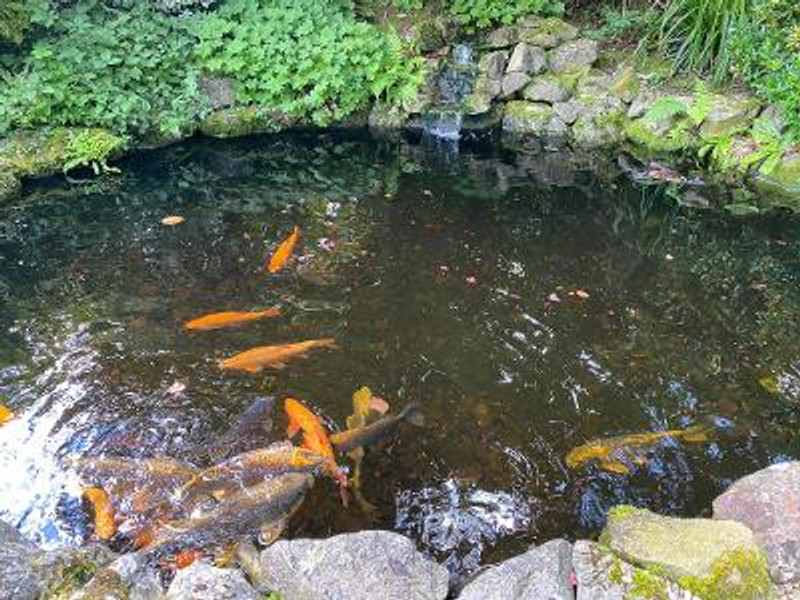 How to look after your pond when you're on holiday…