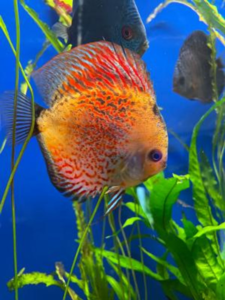 How to look after your aquarium when you go on holiday…