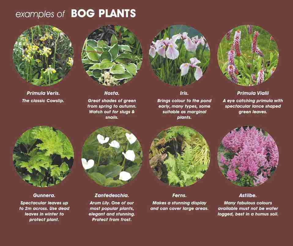 Guide To Bog Marsh Pond Plants Easy Tips Best Results