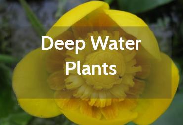 Deep Water Pond Plants