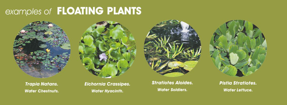 floating-plants.jpg
