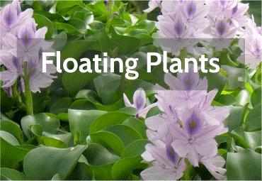 floating-plants.png