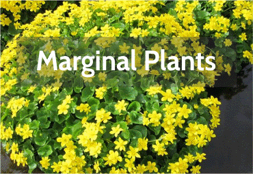 marginal-plants.png
