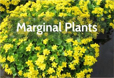 marginal-plants.png