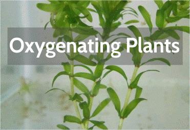 oxygenating-plants.png