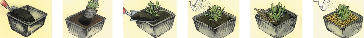 planting-a-pond-basket.jpg