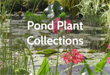 pond-plant-collection-1.png