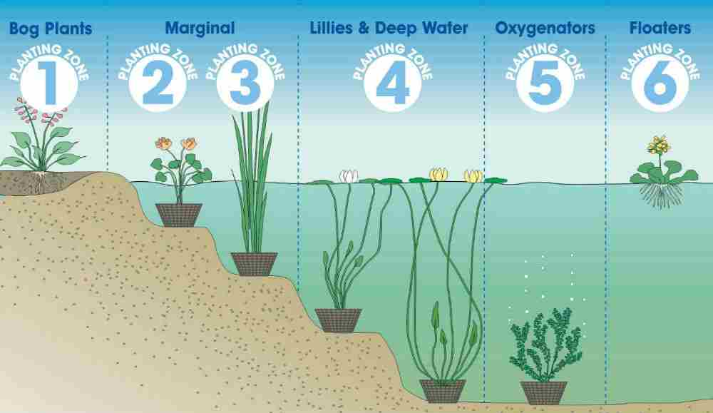 pond plants how to choose great growing tips fast
