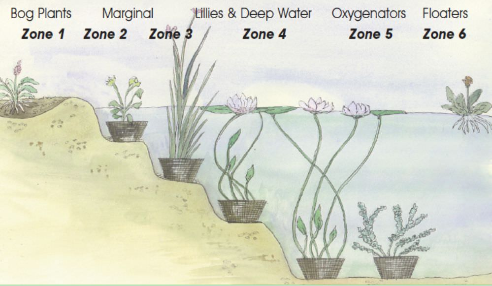 pond-plants-positions.jpg