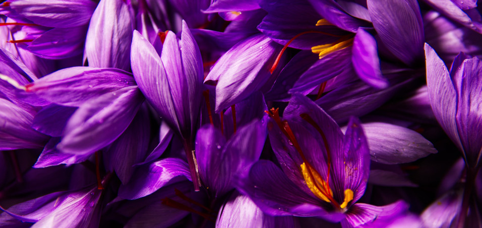 ​King of Spice' Saffron' in your Beauty Regimens