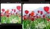 Xit XT62UV 62MMPro series Multi-Coated HD Digital Ultraviolet Filter