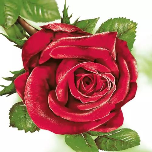 Big Red Rose Paper Napkins