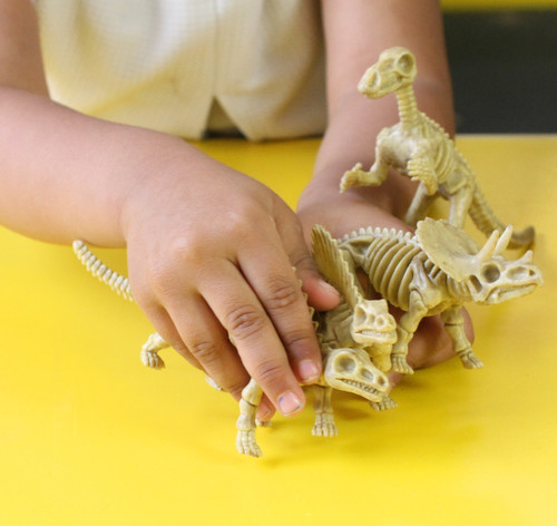 Easy to handle with no small parts, children can collect a full set of dinosaur skeletons.