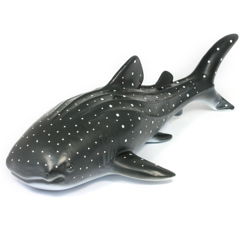 The blue whale shark can be found in open tropical oceans.