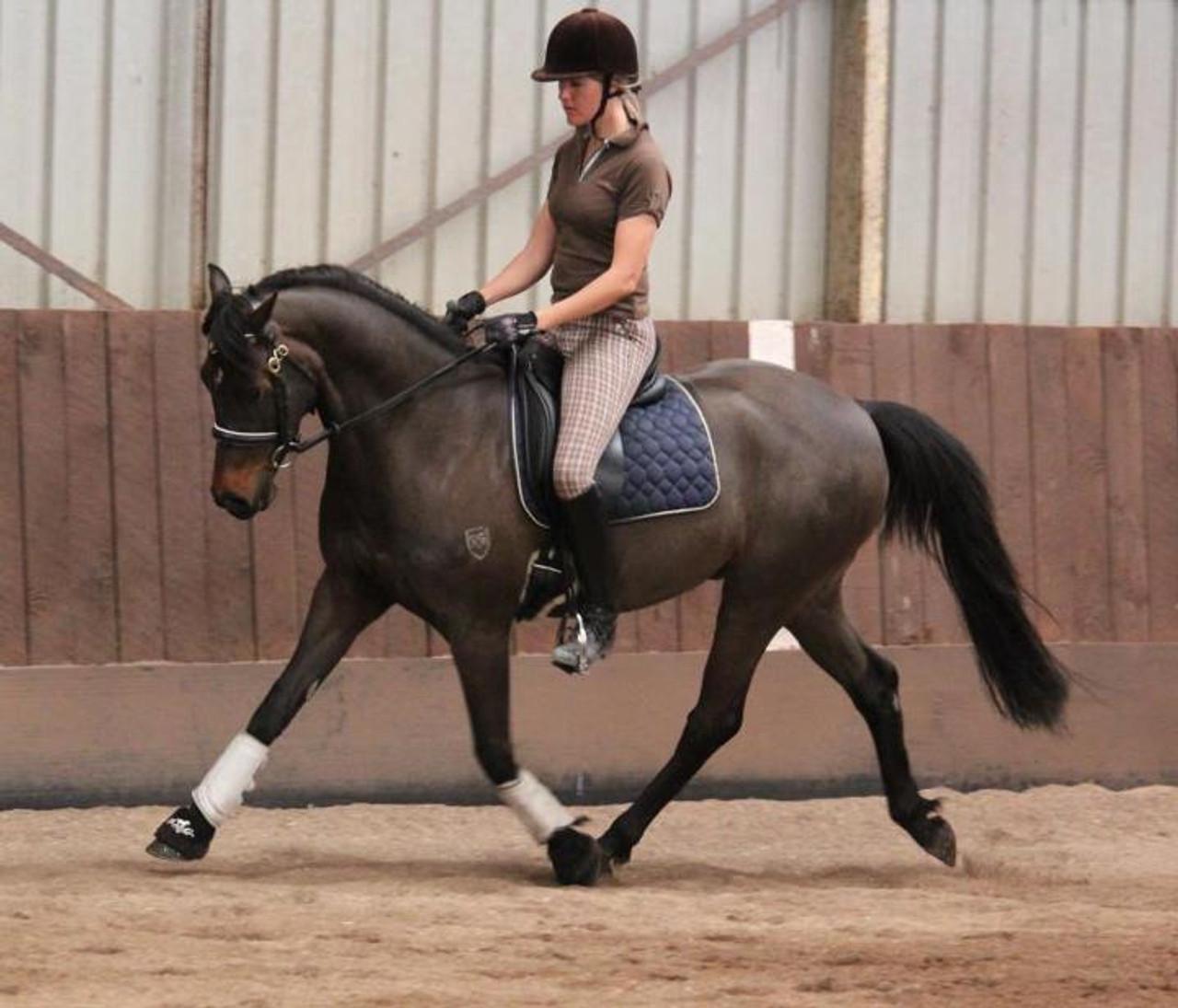 Gruener Saddle Blankets