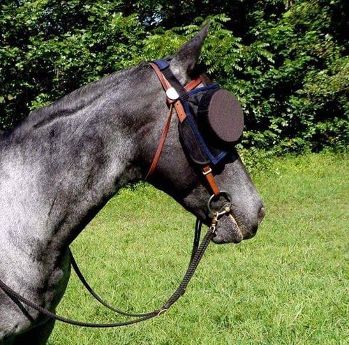 """Photo courtesy of Janis Londraville Horse """"Shady Lady"""""""