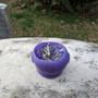 Mini Cauldron Candle