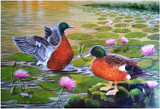 """Ducks"" - an original acrylic painting of ducks by Swapnil Nevgi"