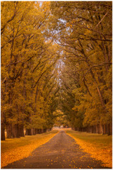 """Golden Path"" - fine art photo print of autumn colours  by Swapnil Nevgi"