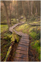 """Tasmanian wonderland"" - fine art photo print of trek at Cradle mountain by Swapnil Nevgi"